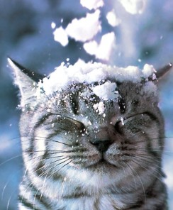 Snowmageddon Update