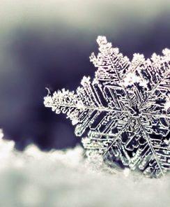 Registration Open for Winter Classes